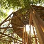 Bois de structure